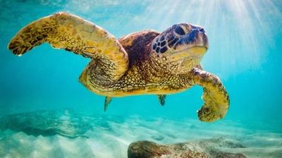 海龟。(图片来源:Adobe stock)